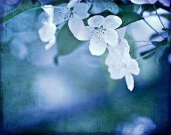 Nature Photography Romantic soft blossoms frost winter cobalt blue white cream green blooms flowers spring photograph - 8x10 Fine Art Print