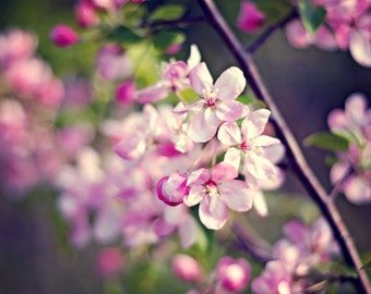 Nature Photography Pink romantic decor art women for her spring elegant colorful vivid bright purple blooms blossoms flowers Photograph art