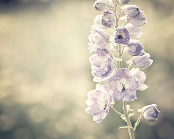 Nature Photography Spring shabby chic romantic light purple pale flowers gold golden faded women decor for her lilac - Fine Art Photograph