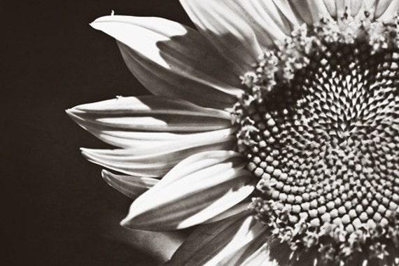 Black white under 25 for her women silver romantic grey gray winter dark love elegant soft flower sunflower - Fine Art Photography Print
