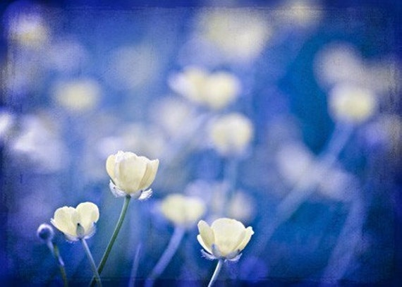 Nature Photography macro Ready to ship wall decor art Blue citrine yellow flowers cobalt for her women sapphire romantic Photograph Print