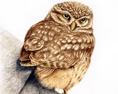 Little Owl Looking Back - original artwork in watercolour