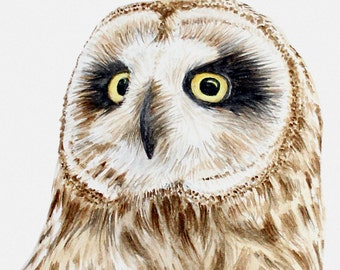 Short-Eared Owl original painting in watercolour (portrait)