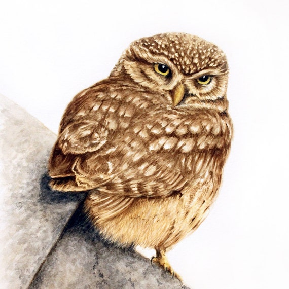 Little Owl Looking Back - original artwork in watercolour