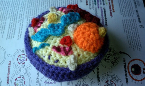 Crochet Cell, Cross Section