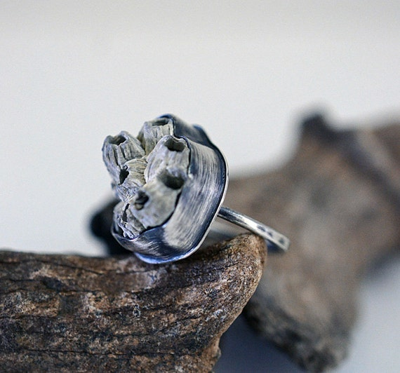 Beachcombing, no. 9, fossil barnacle cluster  ring in sterling silver