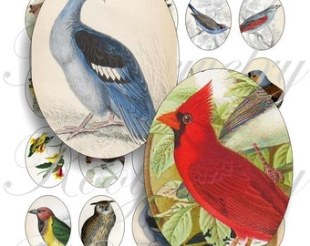 Vintage birds 40x30mm oval images for charms, pendant, buttons, scrapbook and more Vintage Digital Collage Sheet No.454