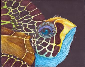 Sea Turtle..Hawksbill Turtle 4