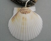 Large Sea Shell Double Strand Necklace