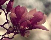 Magnolia dream photo print, rich magenta, petals, pink, green, nature, sping, Easter, home decor, fine art photograph