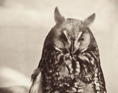 "Owl, nature, print, bird, graduation, education, black and white owl, grey, sepia, feather, fine art photograph 8""x8"""