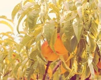 "Peaches, peach, delcious, home, kitchen, restaurant decor, green, orange, nature, fragrant, fine art photograph 8""x10"""