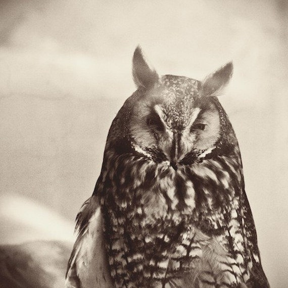 "Owl, nature, print, bird, graduation, education, black and white owl, grey, sepia, feather, fine art photograph 8""x8"""