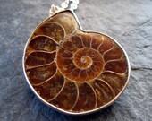 SALE - 10 percent off the entire store - Amber Brown Ammonite Fossil Pendant