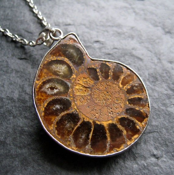 Amber Brown Ammonite Fossil Pendant