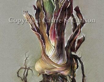 Iris Bulb - print of original colored pencil drawing 5x7