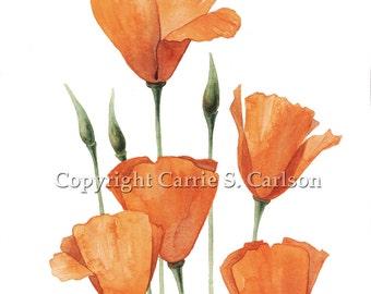 Desert Poppies - print of original watercolor painting 5x7