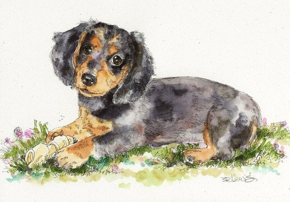 DACHSHUND Original Watercolor on Ink Print Matted 11x14 Ready to Frame