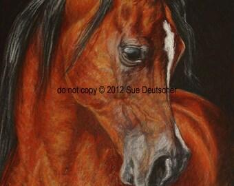 Arabian Horse 11x14 print