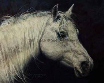 Arabian Horse mare 11x14 print