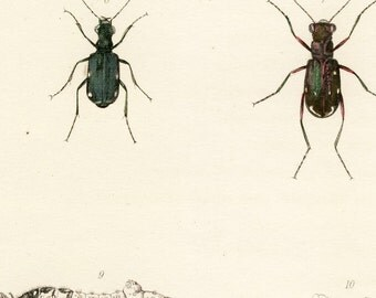Antique hand-colored lithograph - beetles, bugs, insects - Plate 17