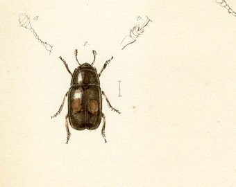 Antique hand-colored lithograph - insects, beetles and bugs - no. 23