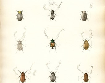 Antique hand-colored lithograph - Beetles, bugs, insects, No. 24