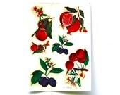 A Fruit Garden - Vintage Italian Fruit Decals