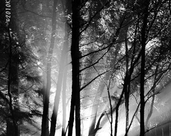 Photography Black and White Landscape Alien abduction scary woods dramatic theatrical decor sci fi spooky monster Home Decor