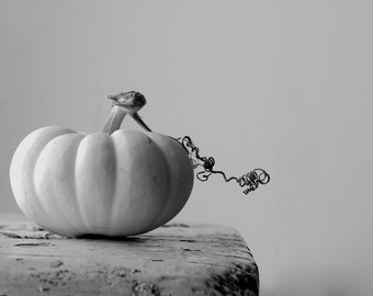 Minimal Pumpkin 8x12 signed black and white photo Fall Autumn shabby home decor earthy natural beauty for Halloween