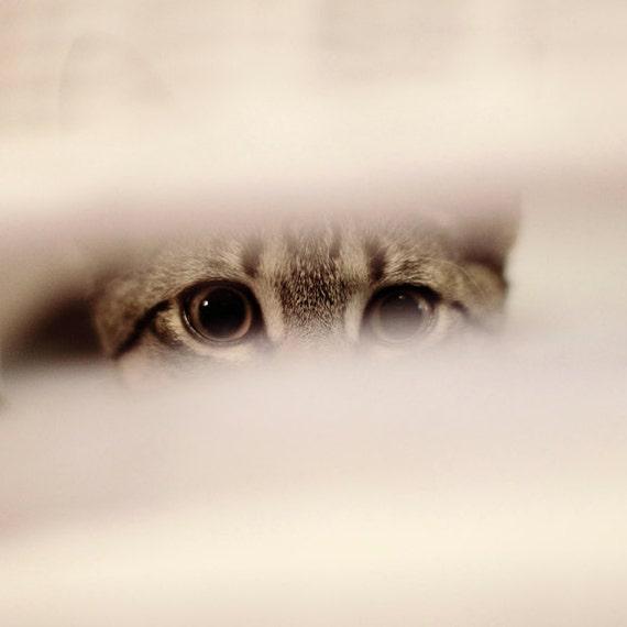 Curiosity 8x8 signed and dated photograph, curious kitten.original,minimal,simple,monochrome,cat decor