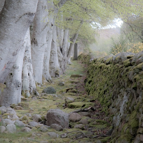 The Magic Between  Fine Art Photography Scotland landscape Mystery Soft Green Dreamy Stone and Wood Outlander Magic Time travel romance love