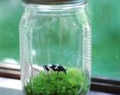 wee cow grazing in lovely vintage jar