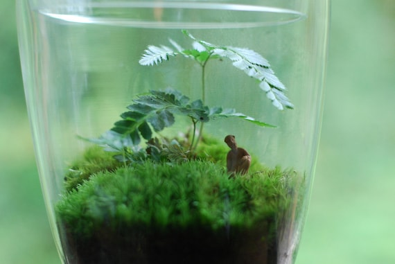a lovely afternoon...beautiful large terrarium