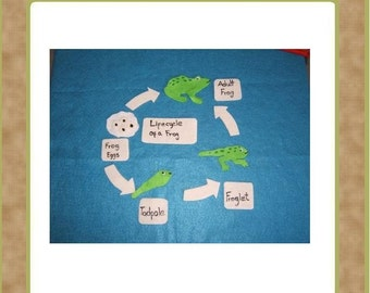 The Life Cycle of a Frog - Felt Set -Teacher Resources