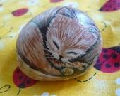 Brown Kitten Rock Friend
