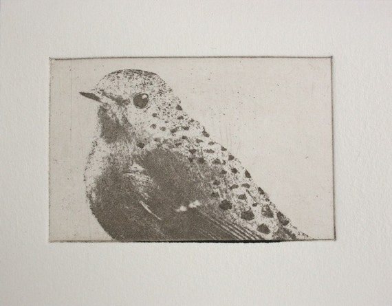 original etching of a spotted bird hand pulled