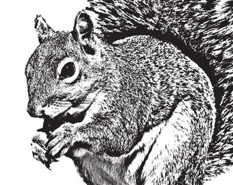 The Squirrel Did It - 5x7 Print