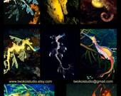 Sea Dragons Leafy and Weedy