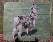 Out Standing in His Field, Llama Photo Mouse Pad
