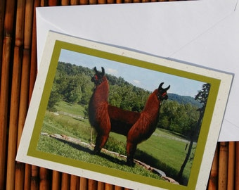 Pushmepullyou Llama Photo Greeting Card, Blank