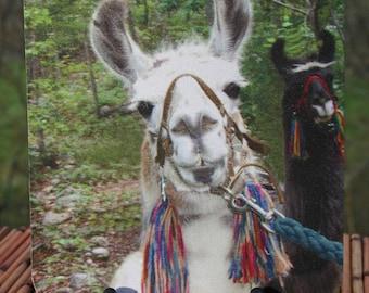 Hi There. Llama Photo Mouse Pad