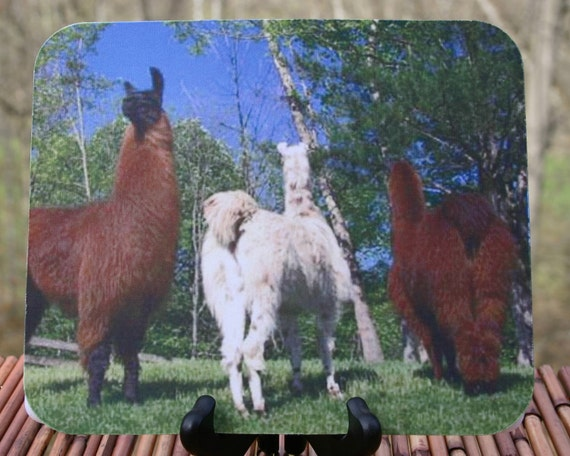 No Butts About It, Llama Photo Mouse Pad