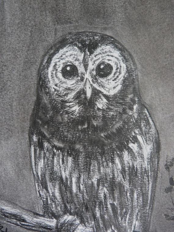 Free Shipping -  Barred Owl (Original Charcoal Drawing)