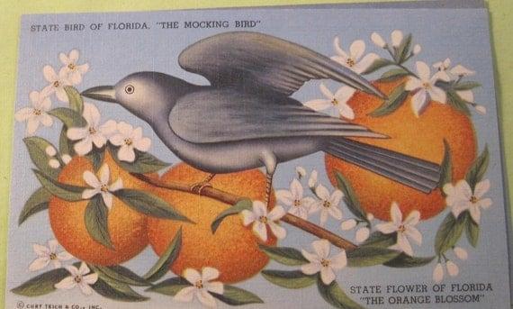vintage postcard state bird and flower of florida mocking bird