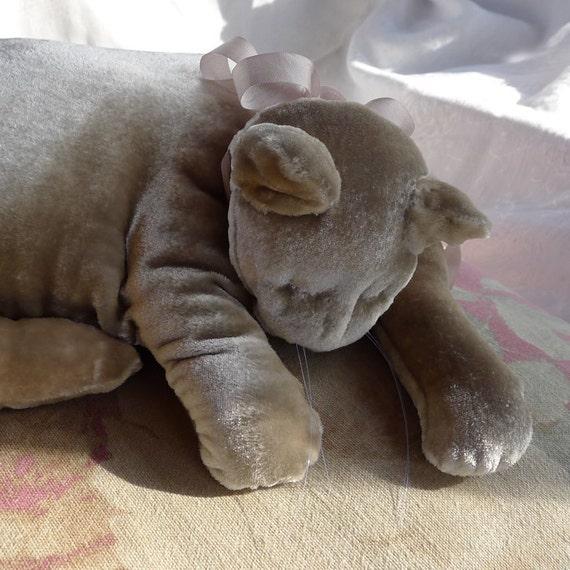 A Whisper Gray Velvet Cat