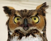 What Is Seen Can Not Be Unseen... Great Horned Owl Bubo virginianus Wildlife photography