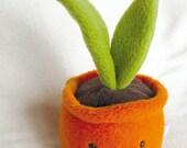 Plant - orange pot