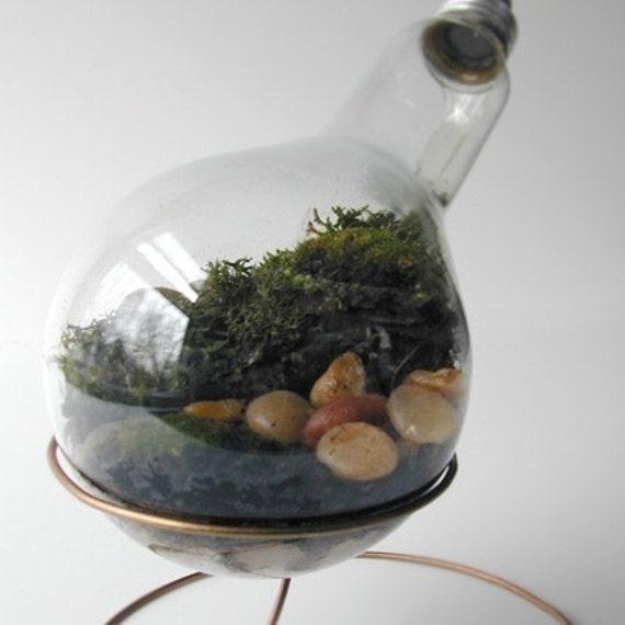 Plain 300 watt Moss Terrarium