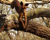 331 Tree Trees - PHOTOGRAPH - Dog jumping out of tree - Signed and Numbered  14 x 14 cm / 5.5 x 5.5 inch ISSUE 20 EX.
